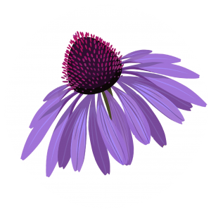 Purple Coneflower Design | Handcrafted Decor | Minnesota